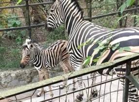 В Москве появятся вертикальные «зебры»